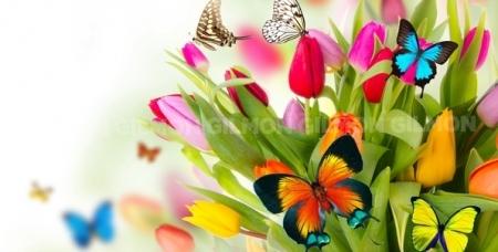 """Посещение """"Парка живых тропических бабочек"""" в ТРК """"Куба"""". Сказочный уголок живой природы в Челябинске!"""