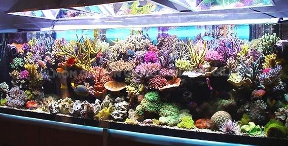 """Бесплатное обслуживание аквариума любого объема и оформление от компании """"Аква-дизайн Амальфи"""""""
